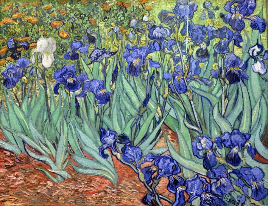 Van Gogh's 'Irises' 0664