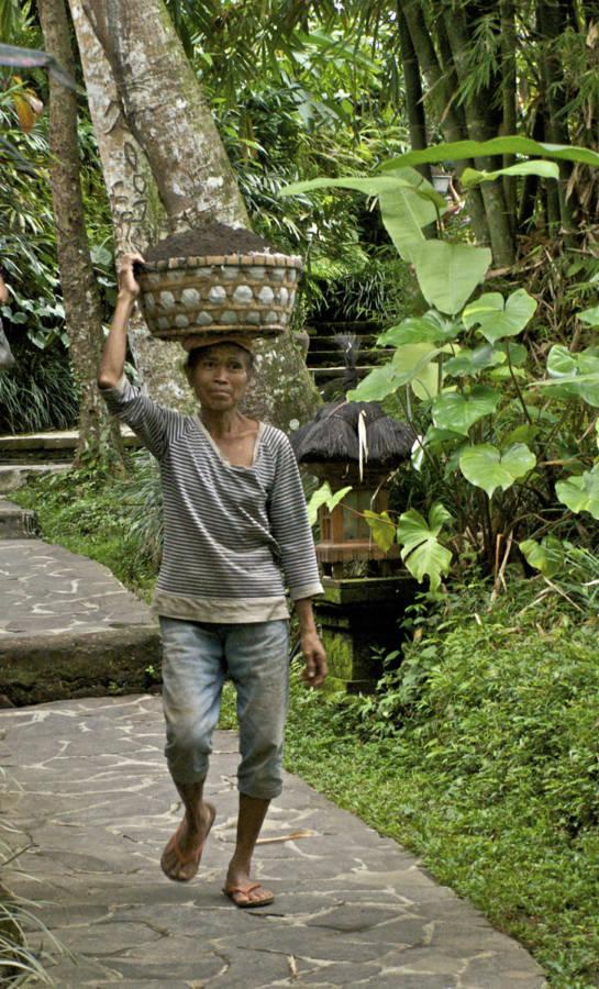 Bali Gardener 0469