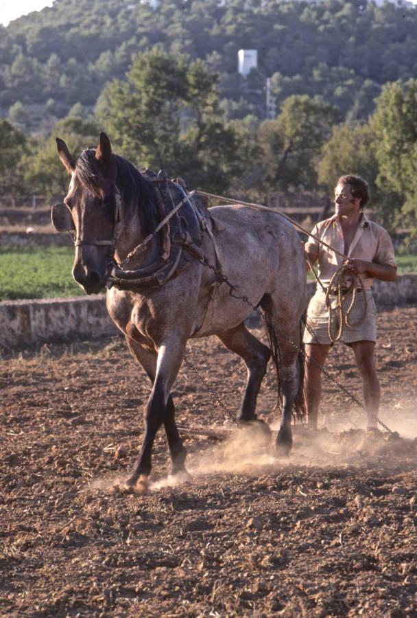 Farmer In Ibiza