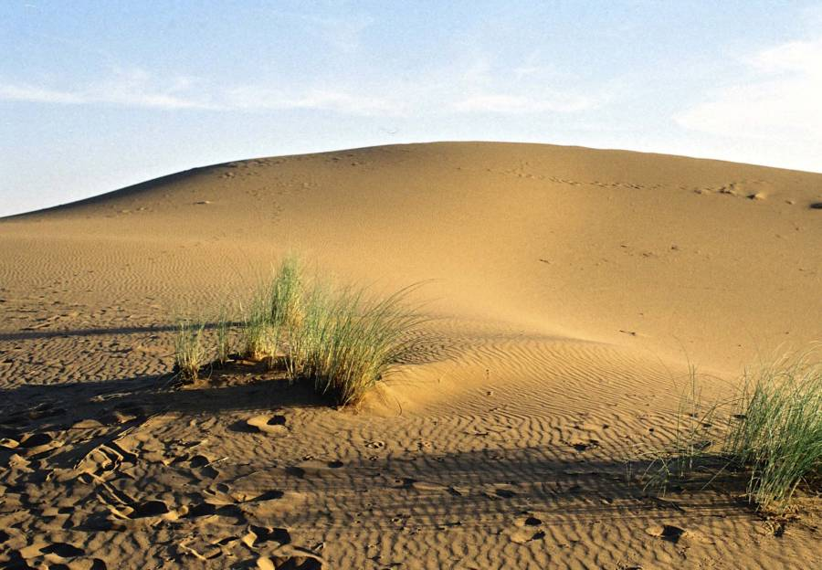 Moroccan Desert Near Algiers