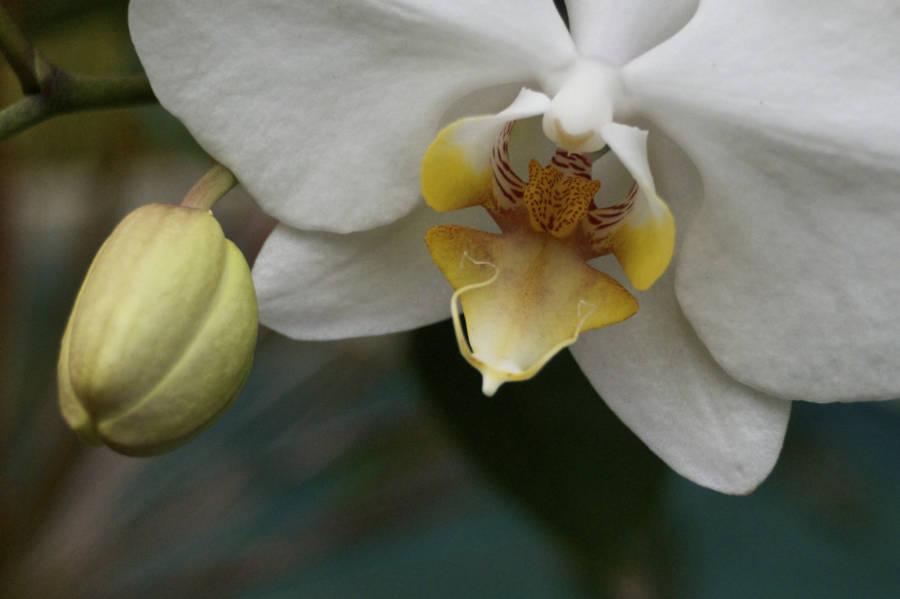 Orchid At Villa Jahti Dsc 0092 Version 3