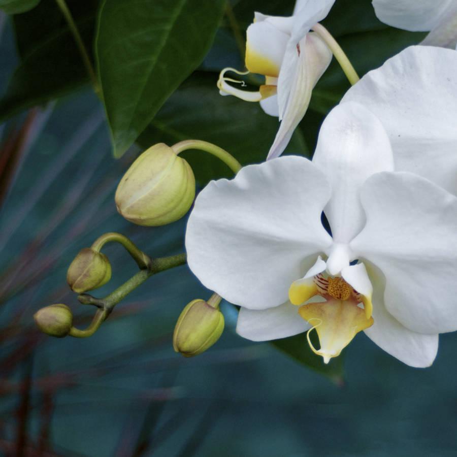 Orchid At Villa Jahti 2