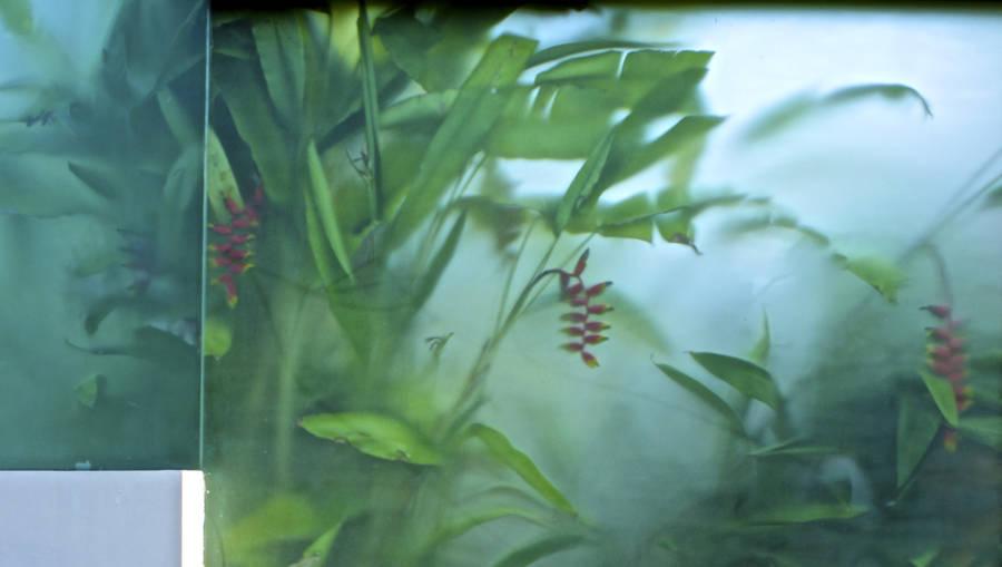 Glass Like Water Bali